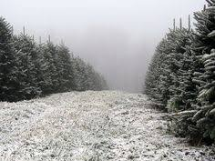 christmas tree farm christmas pinterest christmas tree farm