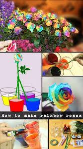 best 25 rainbow flowers ideas on pinterest rainbow roses