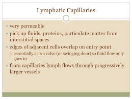 Anatomy And Physiology Pick Up Lines Honors Anatomy Chapter 20 The Lymphatic System Functions Parts 1