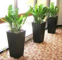 Plants For Office Green Indoor Plants For Office In Greater Noida Delhi U0026ncr Noida
