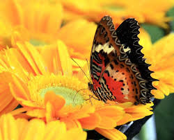 Butterfly Flower Colorful Butterfly On Flower Stock Photo Image 9588704
