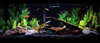 20 gallon aquarium live plants google search pets and animals