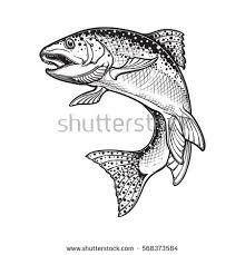 trout jumping stock images royalty free images u0026 vectors