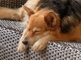 comment empecher chien de monter sur le canapé les règles et les interdits pour mon chien tout pour mon chien