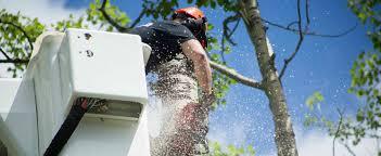 professional tree cutter rotator photos jeff s professional trees