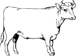 clipart ox