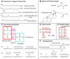 lipid and carbohydrate metabolism in caenorhabditis elegans genetics