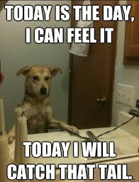 Daily Memes - daily dose of funny dogs humor quotes and memes from