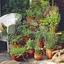 Patio Herb Garden Ideas How To Create Your Herb Garden Plan Herb Gardening Help