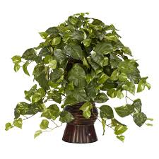 Plants For Living Room Interior Traditional Living Room Design With Exciting Pothos Plant