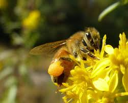 backyard beekeeping workshop with local living venture u0026 the wild