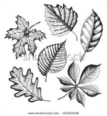 autumn leaves set sketch style vector stock vector 153594026