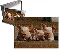 cheap piglets piglets deals alibaba