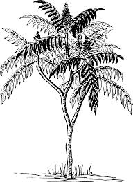 palm tree svg clipart sumac
