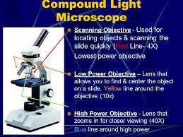what is a light microscope used for microscopes the discovery of cells quiz number paper from 1 5