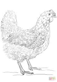 hen coloring page free printable coloring pages