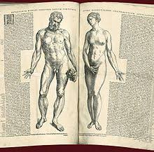 Anatomy And Physiology Human Body Human Body Wikipedia