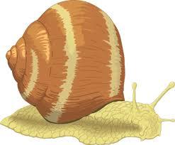 cartoon animals homepage clipart net funny snail clipartix