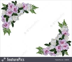 Gardenias by Illustration Of Floral Border Roses And Gardenias