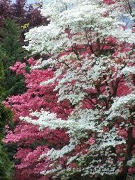 Comfort Inn Hood River Oregon 103 Best Hood River Oregon Images On Pinterest Oregon Usa