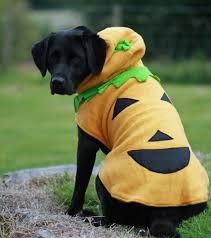 dog halloween costumes 2017 black and white movie costume unique diy flapper costume ideas