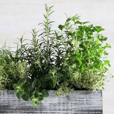 Indoor Herb Garden Ideas by 39 Diy And How To Indoor Herb Garden Windowsill Ideas U2013 Design