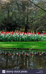 red green color combination mixed bed border spring blooming bulbs red white colour color