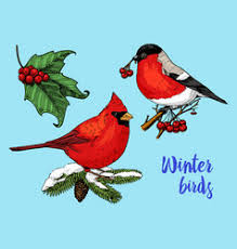 merry christmas hand lettering with red robin bird