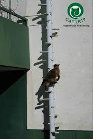 katzenleiter balkon katzenleiter 02 215 515 katze cat cat