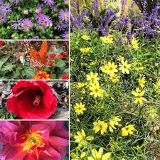 native plants natural areas notebook plants for fall archives hill country water gardens serving
