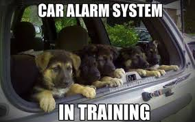 German Shepherd Memes - car alarm jpg