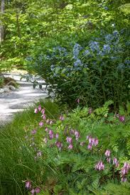 edge of the woods native plant nursery walk on the wild side a new england woodland garden gardenista