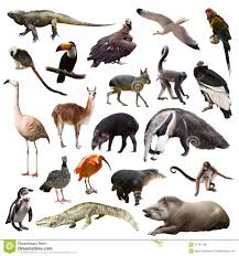 set of animals of south america over white background stock photo