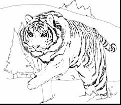 fantastic wests tigers colouring pages with tiger coloring pages