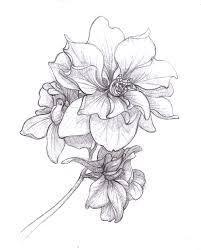 larkspur drawing july birth flower google search inked