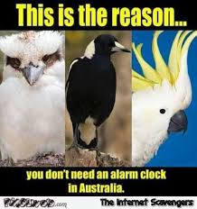 Alarm Clock Meme - why you don t need an alarm clock in australia meme pmslweb