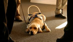 Dogs For The Blind Jobs On The Job And After Hours How Guide Dogs Work Howstuffworks