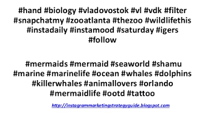 australian shepherd hashtags best instagram hashtags for animals top tags for likes
