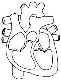 discover the human heart and how it works with this free printable