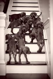 a home with dogs and cats