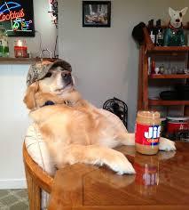 dog peanut butter psbattle dog afraid of peanut butter photoshopbattles