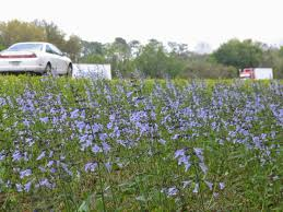 florida native plant florida wildflowers alliance hill rv park just off i 10 north fl
