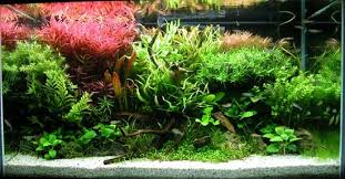 Small Tank Aquascaping Aquascaping Wikipedia