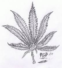 best weed leaf pencil drawings marijuana drawings google search
