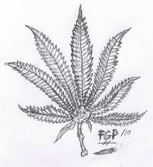 best weed leaf pencil drawings marijuana drawings google search