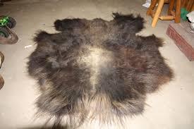 Bison Hide Rug Buffalo Robe Taxidermy Ebay