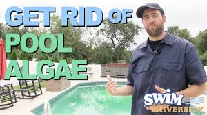 how to get rid of swimming pool algae youtube