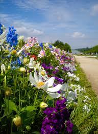 immagini di giardini fioriti sentieri fioriti nei giardini di versailles carnet de voyage