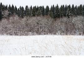 fir tree snow russia stock photos fir tree snow russia stock