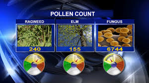 Pollen Map Ragweed Allergy Clear Sinuses With A Xylitol Sinus Rinse Xlear